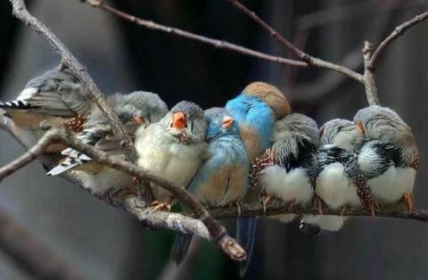 birds-on-a-branch